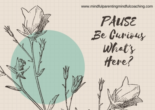 Pause Be Curious